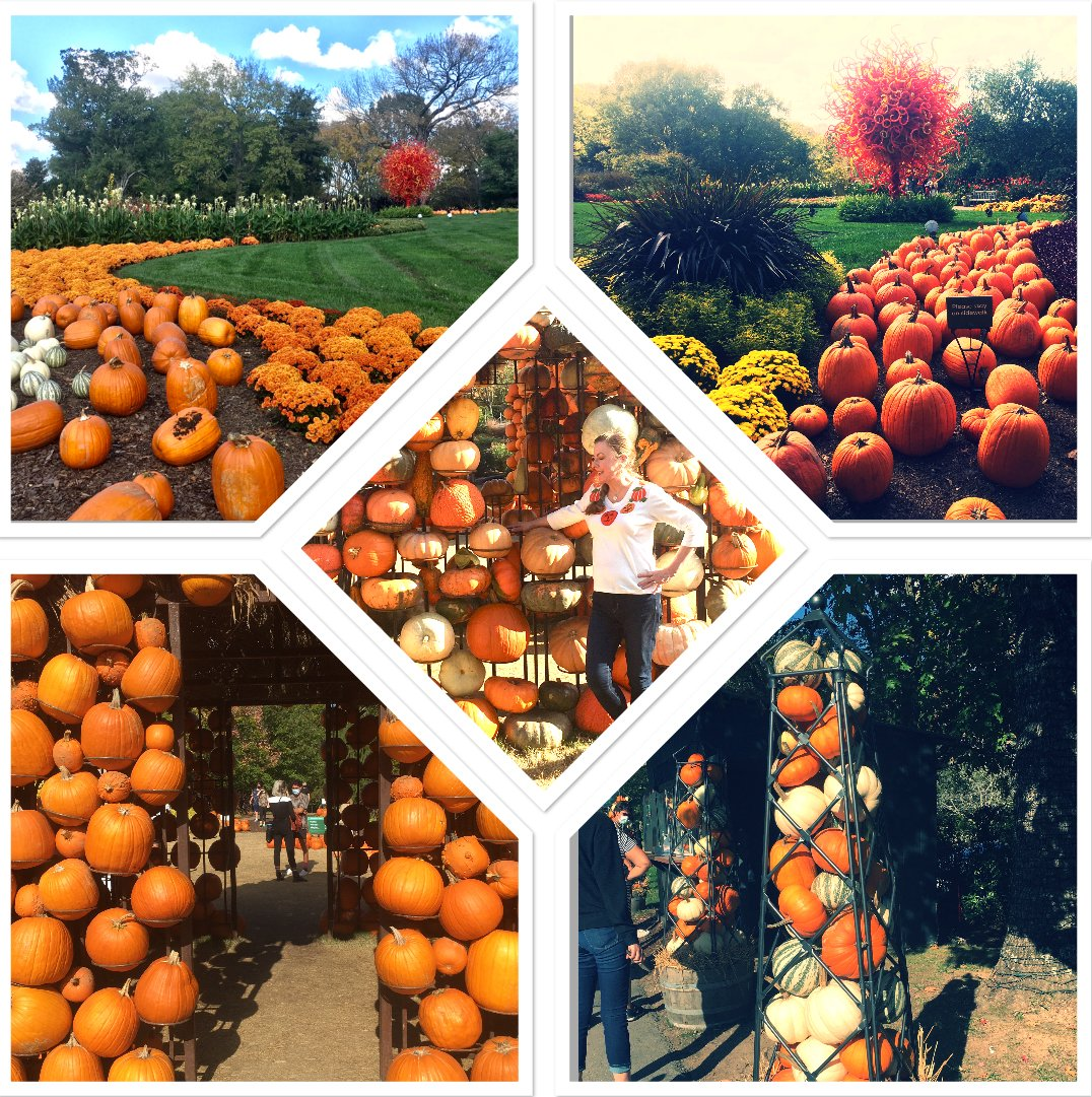 Collage of Cheekwood Harvest images